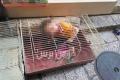حدث في القدس..بائع عصافير يحبس طفله في قفص