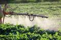 ضربة قوية لشركات الكيماويات الزراعية: حظر الاتحاد الأوروبي استخدام المبيدات المنتمية لمجموعة neonicotinoids ...