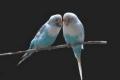 هل تعرف لماذا تغرد الطيور عند الفجر ؟؟