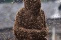 مسابقة إرتداء النحل في الصين ، أغرب مسابقه قد تراها !