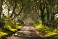 منذ 300 عام... أسيجة الظلام – طريق ممتد فريد من نوعة ممتلئ بالأشجار المزهلة