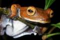 أغرب الكائنات الحية التي تم اكتشافها خلال السنة الأخيرة ... شاهد الصور
