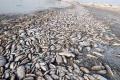 حشرة غامضة تهدد بالقضاء على الثروة السمكية في مصر
