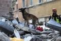 هل تستطيع الحيوانات فعلًا استشعار الزلازل قبل حدوثها؟