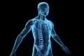 هل صحيح أن جسم الإنسان يجدد نفسه كل 7 سنوات؟
