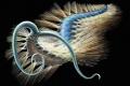 """اكتشاف مخلوق """"غريب"""" عمره 508 أعوام"""
