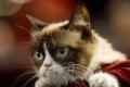 """قط يكسب ثروة طائلة بسبب """"عبوسه"""""""