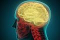 ما الذي سيحدثُ لدماغك عندما تموت؟