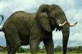 بهذه الدولة تباع الشعرة من ذيل الفيل بـ 20 دولاراً