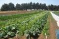 الزراعة وشيء من برمجة العقول (الحلقة الأولى)