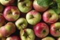 هل سيختفي التفاح الأحمر قريبا من الأسواق ؟