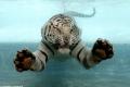 حيوانات تحت الماء: 15 صورة رائعة لحيوانات تسبح في الماء