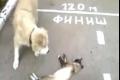 بالفيديو .. قط يتصنع الموت بإتقان حتى يهرب من الكلب .. شاهد ماذا حدث!!