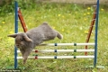 توأمان من بريطانيا يدربان الأرانب على سباق قفز الحواجز (صور + فيديو)