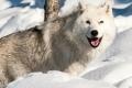 مكافئة إذا اصطدت ذئباً على حافة منطقة نووية!