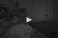 فيديو مرعب جداً.. ثعبان يتسلل إلى غرفة سيدة ويلدغها وهي نائمة