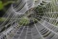 رغم خفة وزنها.. علماء يكتشفون سرّ متانة خيوط العنكبوت