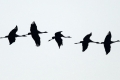 ناطحة سحاب تقتل مئات الطيور في تكساس