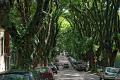 هل تعرف/ي الشارع الأكثر جمالاً في العالم؟؟؟