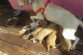 مأوى مهدد بالإزالة في بيت ساحور يفتح الباب واسعاً أمام مصير الكلاب الضالة في الأراضي ...