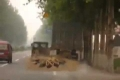 مكنسة الشوارع الصينية: إبتكار بسيط وطريف وحافظ على نظافة الشوارع الصينية منذ عقود