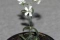 علماء يعيدون الحياة لنبات متجمّد منذ أكثر من 30 ألف عام في صحراء سيبيريا