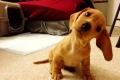 لماذا تميل الكلاب برؤوسها عند الحديث إليها؟