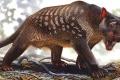 كيف أباد البشر حيوانات أستراليا الضخمة