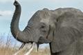 بالصور.. قطيع من الأفيال يتعرض لمجزرة بعد إصابته بماس كهربائي