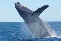 ظاهرة غامضة انتشرت في وسائل التواصل.. ما حقيقة صوت الحوت الأزرق؟