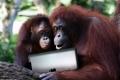 """آخر زمن... تعليم القردة على """"الآي باد"""" في أمريكا وكندا"""