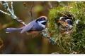 الأمومة عند جميع المخلوقات.. 30 صورة للتأمل في فطرة الأمومة عند المخلوقات المختلفة.. شاهد الصور