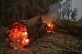 ما علاقة لحم البقر والصويا بحرائق الأمازون؟