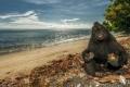بالصور.. حتى القرود سعيدة بجلوسها على الشاطئ