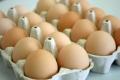 الصحة الاسرائيلية تكشف عن مرض خطير في الدجاج المثلج والبيض والمعلبات