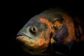لماذا الأسماك لا تغمض عينيها أبداً ؟؟؟
