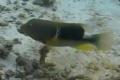 شريط فيديو غير مسبوق يظهر استعمال الاسماك الأدوات المختلفة لتجهيز الطعام