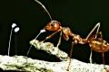 كيف يشم النمل الروائح رغم أنه لا يملك أنفاً!