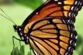 الفراشات الملونة تجتاح القطاع
