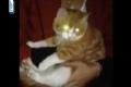 "بالفيديو: لبنانيان مجرمان يستمتعان بتعذيب قط داخل ""ميكروويف"""