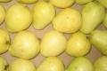 الفوائد الصحية والطبية للجوافة