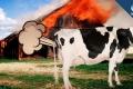 أيهما أكثر ضررًا على البيئة: الأبقار أم السيارات؟!