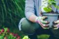 دراسة: الأشجار تفرح وتبكي.. وتقنية حديثة تسمح لك بتجربة مشاعر النباتات