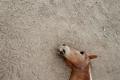 موجة الحر الكبرى في استراليا تتسبب في نفوق 90 حصاناً عثر عليها قرب نبع ماء ...