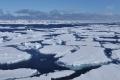 كيف تغلبت الحياة على قسوة العصر الجليدي؟