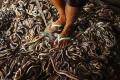 صور مثيرة لمراحل صناعة الحقائب من جلود الثعابين