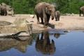 هل يمكن للحيوانات التعرف على نفسها في المرآة؟