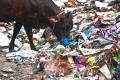 بسبِ أضرارها الصحية والبيئية...حملة لمكافحة أكياس البلاستيك في المخابز مطلع 2018