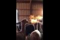 فيديو مذهل لحيوان اللاما ينفث ألهبة النار
