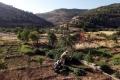 الانحدار الزراعي الفلسطينيي الصادم إلى أين؟